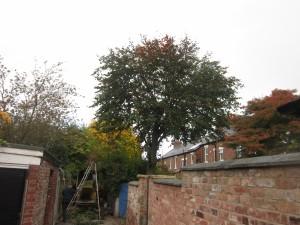Tree-surgeon-Stockport-0797