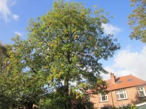 Tree-surgeon-Stockport-0801