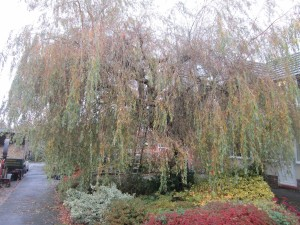 Tree-surgeon-Stockport-0810