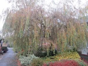 Tree-surgeon-Stockport-0810