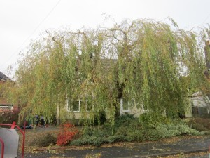 Tree-surgeon-Stockport-0813