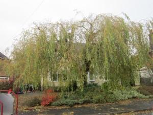 Tree-surgeon-Stockport-0813