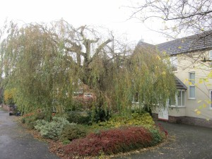 Tree-surgeon-Stockport-0815