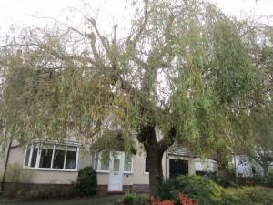 Tree-surgeon-Stockport-0817