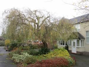 Tree-surgeon-Stockport-0819