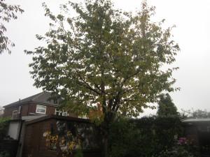 Tree-surgeon-Stockport-0822